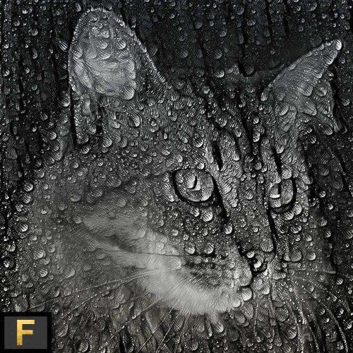 COSMIC-CATS