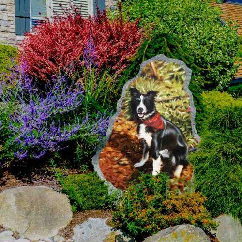 pet portrait on rock
